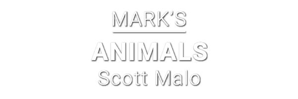 Marks-animals